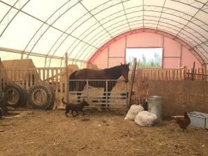 Horse at Northern Farm Training Institute