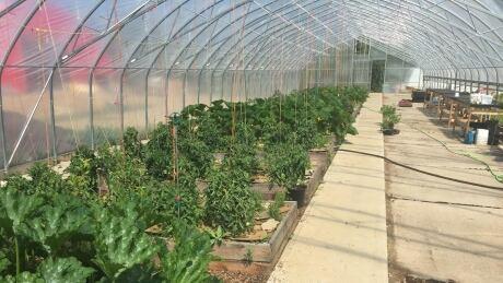 Garden at Northern Farm Training Institute