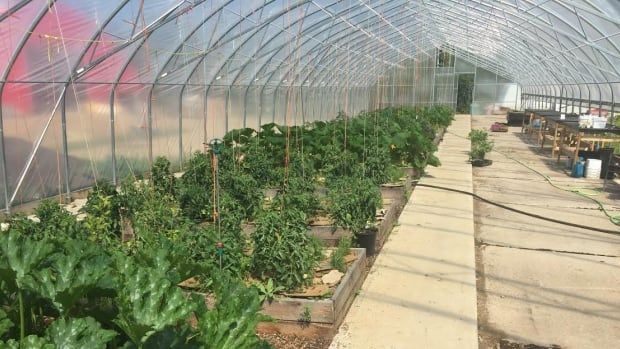 The greenhouse at the Northern Farm Training Institute. The organization wants to develop a model farm that can feed 200 people. The farm grows vegetables in two different greenhouses as well as outdoors.
