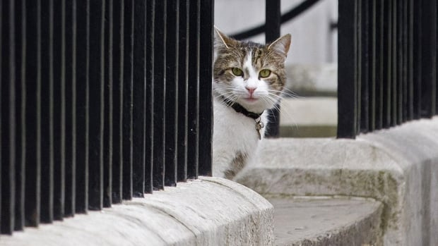 Larry, the beloved 10 Downing Street tabby cat, will stay on even as Prime Minister David Cameron, who brought him in to deal with a rodent problem in 2011, moves out.