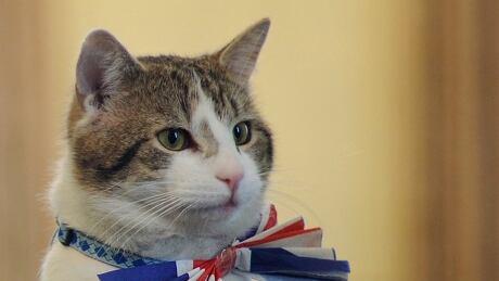 Larry the cat wears a unnion jack tie in 2011 royal wedding
