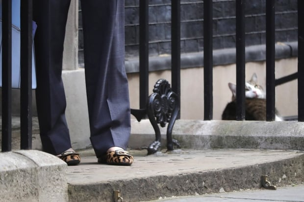 Larry the cat naps while Theresa May arrives at 10 Downing July 12 2016