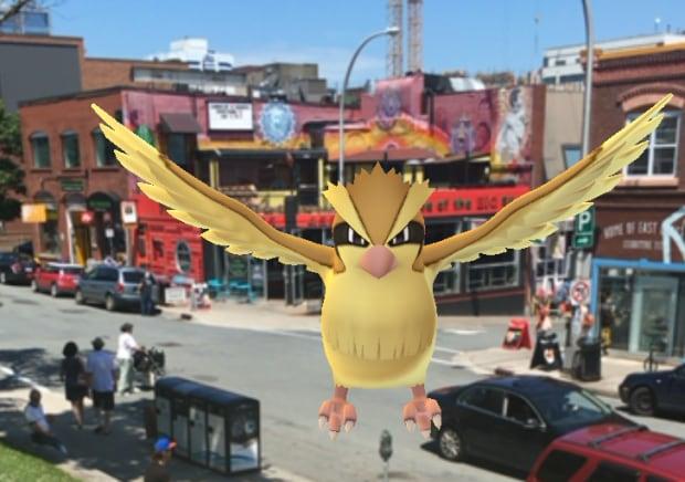 Pidgey Pokemon Go Pizza Corner Halifax