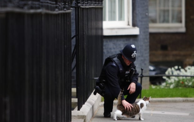 Larry the 10 Downing cat gets a pet from a bobby in 2015