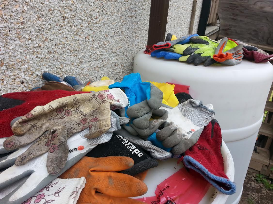 40775c3977  Kleptomaniac  cat steals cache of gloves