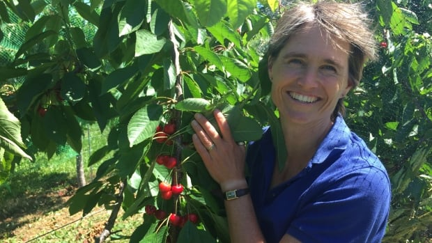 Suzanne Blatt, a research entomologist with Agriculture and Agri-food Canada, is working on a 10-year trial that is testing different variations of cherry trees at an experimental research facility in Kentville, N.S.
