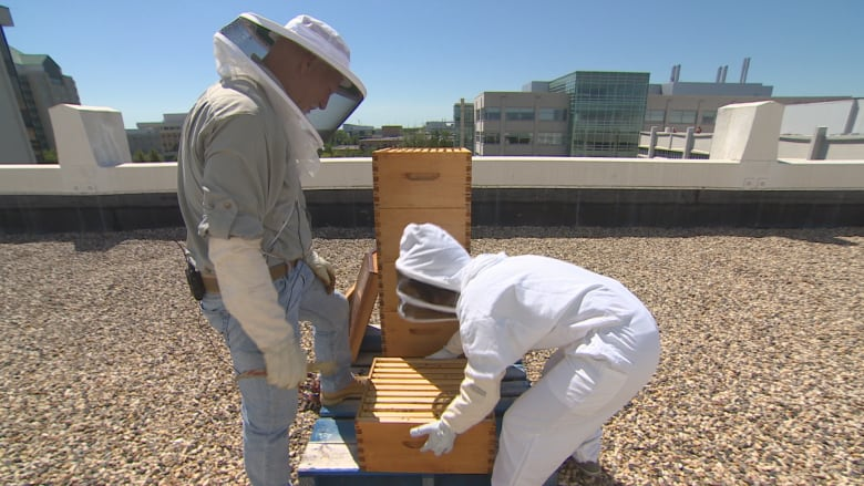 There will be no bee hives on the roof of Saskatoon City Hall