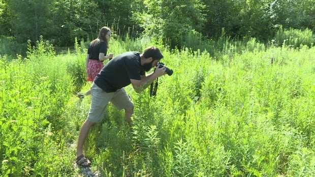 Summer students photographing bumble bees