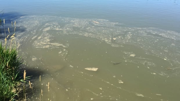 Contaminated water from the North Saskatchewan River following the Husky Energy oil spill on July 21.
