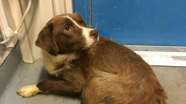 The Town of Inuvik is urging people to make sure their dogs are vaccinated against parvovirus, a potentially fatal and highly contagious virus that only affects dogs.