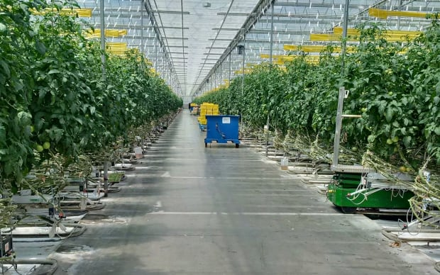 Stock Leamington Greenhouse