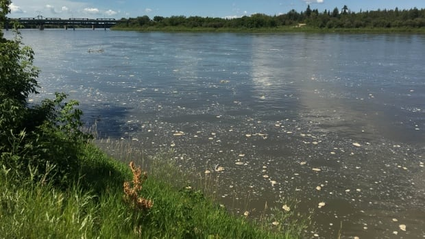 The North Saskatchewan River in Prince Albert on Tuesday, July 26.