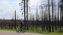 forest in Fort McMurray