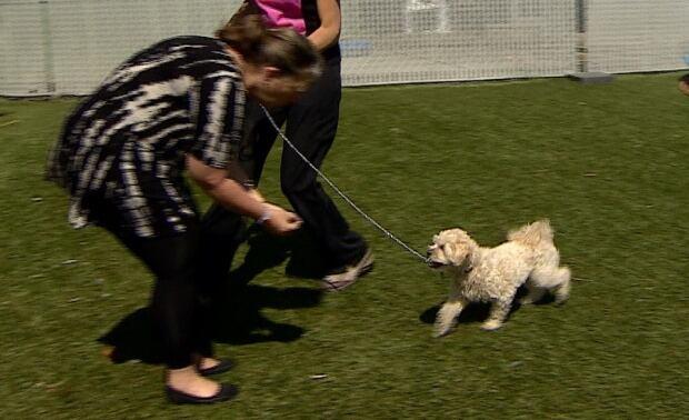 Dog training recall 3