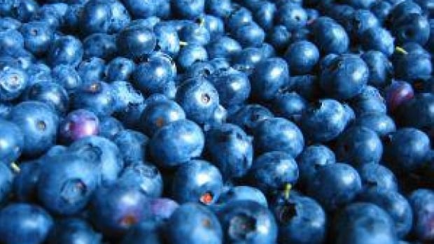Blueberry season in B.C. is expected to last until at least mid-September.