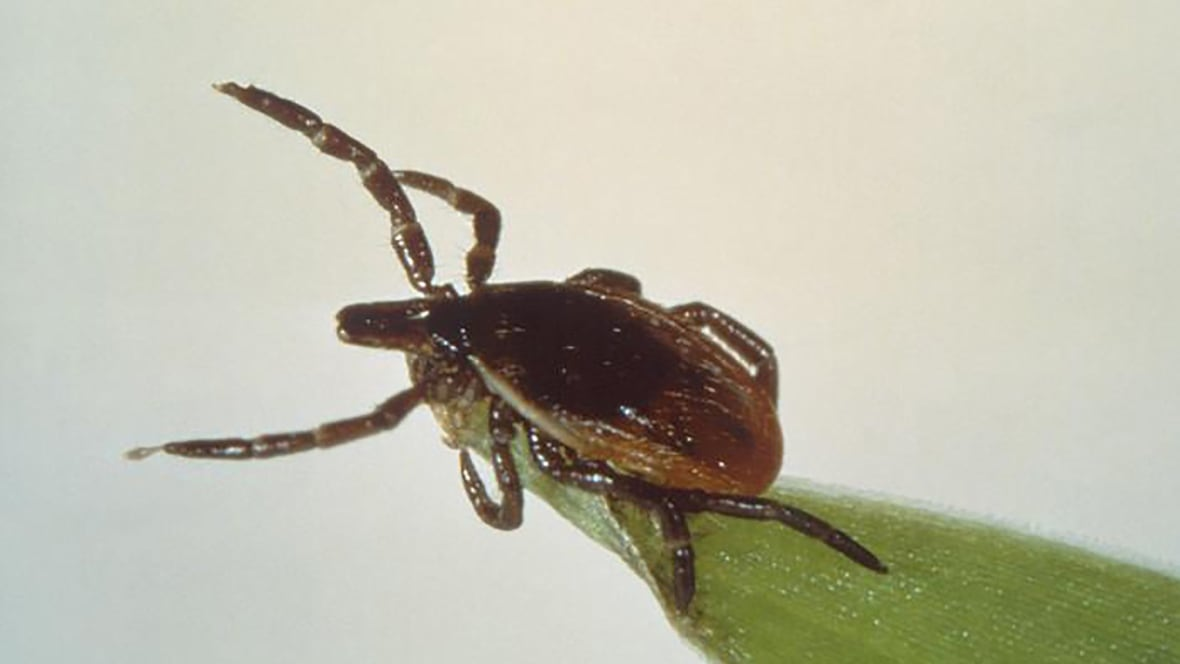 Quebec wildlife agents want Lyme disease recognized as occupational hazard
