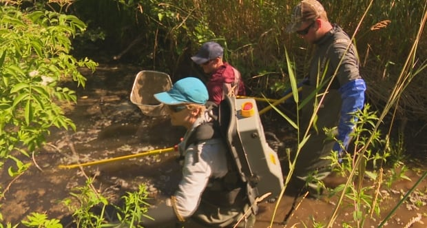 fish-rescue-workers-pei