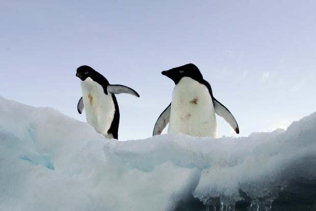BOOKS-ANTARCTICA/LEADERSHIP