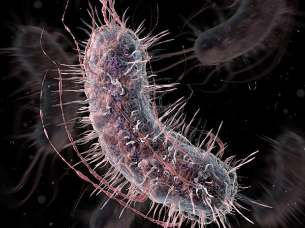 Superbugs set to meet their match thanks to Mac research