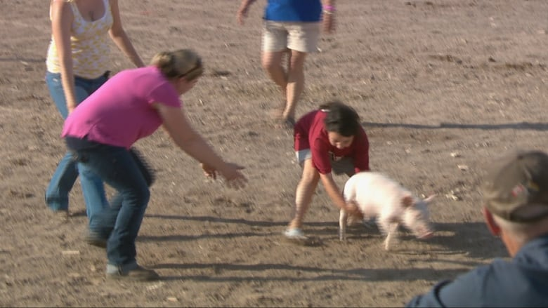 Pig scramble game 'outrageous,' says animal rights advocate