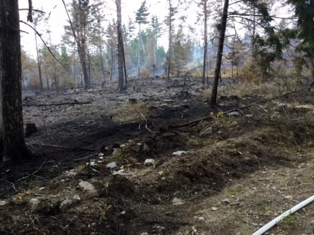 The fire scorched this patch of forest.