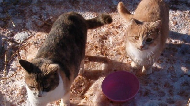Two cats that have been helped with food from the Cat Action Team.