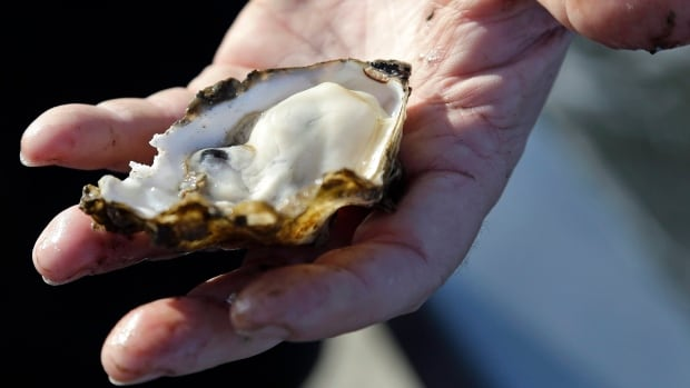 Island Health says an investigation is underway into affected oysters on Vancouver Island after more than 100 people became sick.