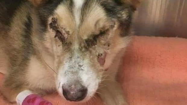 Edmonton Dog Rescue Shelters
