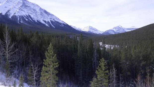 The ice-free corridor in B.C. and Alberta was the first place that the ice sheets melted at the end of the last ice age. This is what it looks like today.
