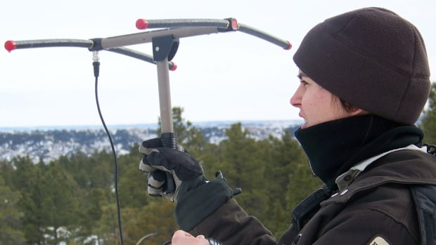 A U.S. Fish and Wildlife Service official uses telemetry equipment to locate radio collared mountain lions. The equipment has now been banned for public use in Canada's Banff, Kootenay and Yoho national parks after several suspected cases of photographers using them to locate animals, which is considered harassment of wildlife.