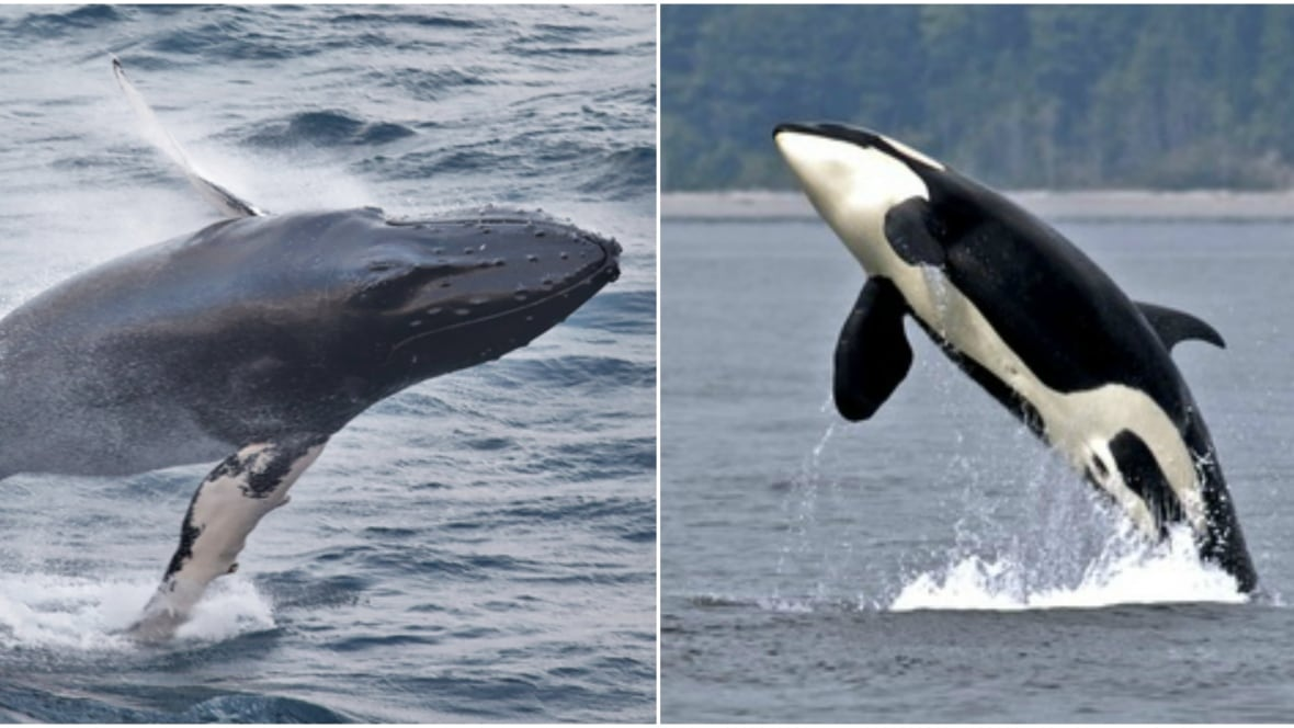 whale wars essay Whale research by-product the institute of cetacean research (icr) research plans, achievements, scientific papers.