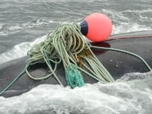 A North Atlantic right was found dead in the Gulf of Saint Lawrence in July, while another whale was entangled in fishing gear.