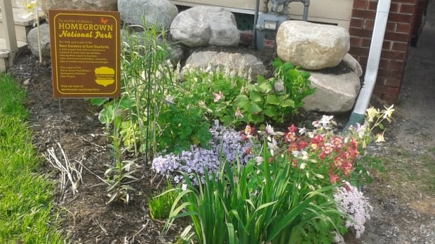Marc Yamaguchi built a rain garden in his front yard more than a year ago to prevent a slow leak of stormwater into his basement.