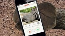 Rhino because News