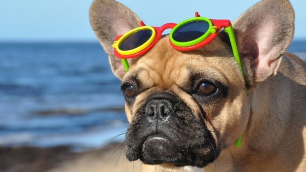 Get yourselves to a beach today, if you can, because it's going to be hot.