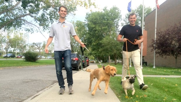 Spot dog walkers