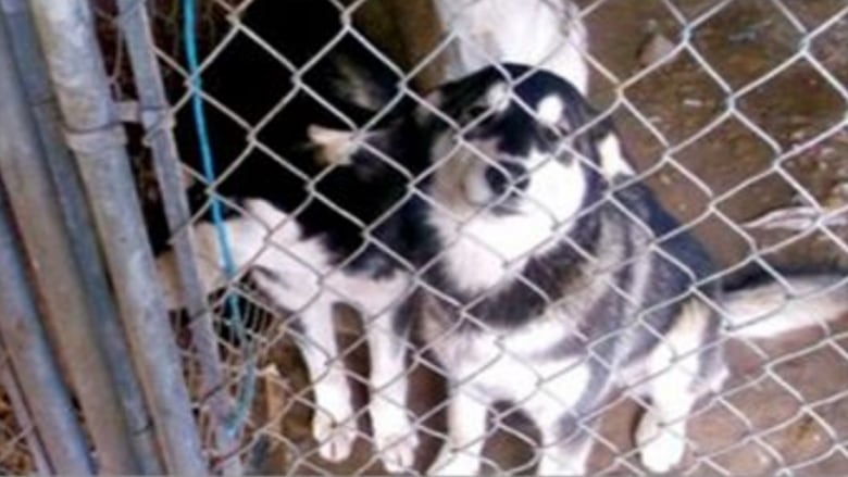 Dogs In Death Row To Canada