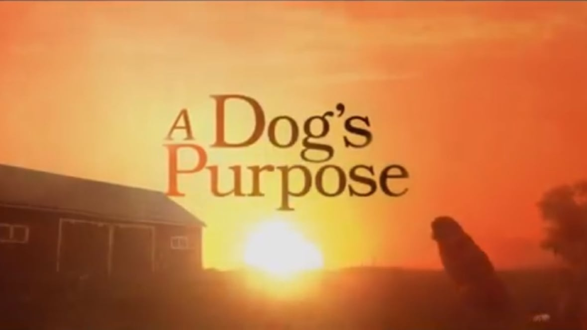 A Dog S Purpose Abuse Youtube