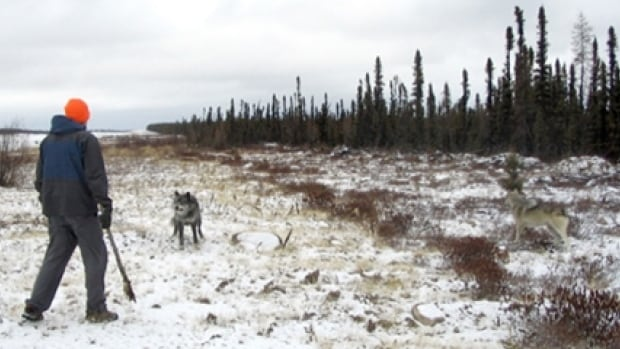 Wolves photographed at Point North Landing less than 24 hours before Kenton Carnegie was killed in 2005.