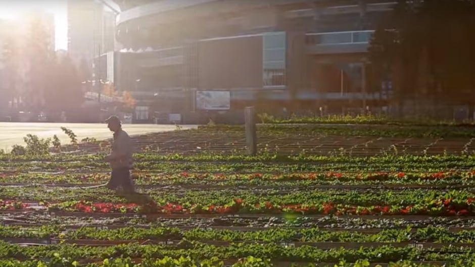 Sole Food Farms uses land in downtown Vancouver to grow crops.