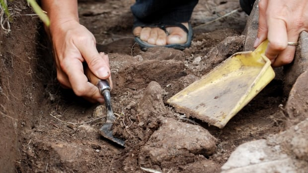 A team of 14 international experts spent three weeks digging into the dirt of Point Rosee, in N.L.'s Codroy Valley, taking samples and searching for  evidence of Vikings.