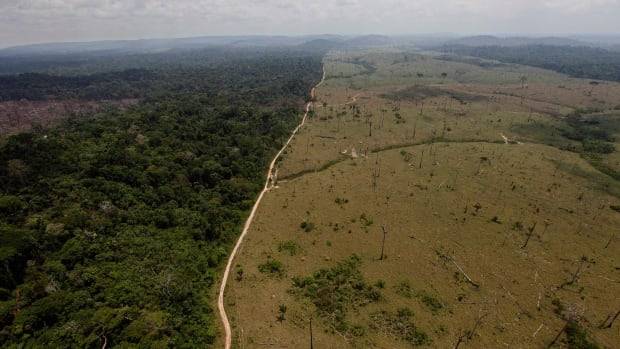 Most of the measured wilderness loss has been in the Amazon and in West African jungles, where human encroachment for pastureland and resource extraction is at an all-time high.