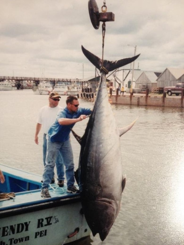 the biggest baddest fish in the ocean why people are fascinated