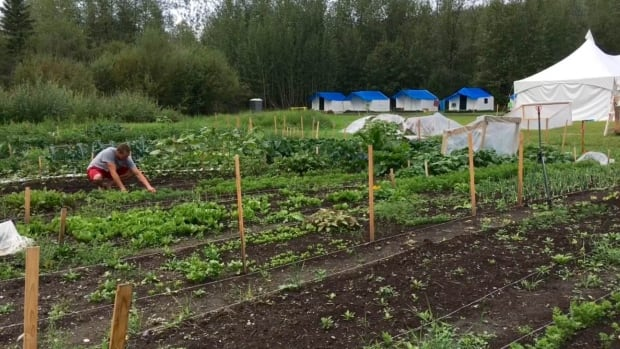 A student in last year's class tends to his garden plot at the Tr'ondëk Hwëch'in First Nation's farm school near Dawson City, Yukon. Some students live on-site in wall tents during the growing season.