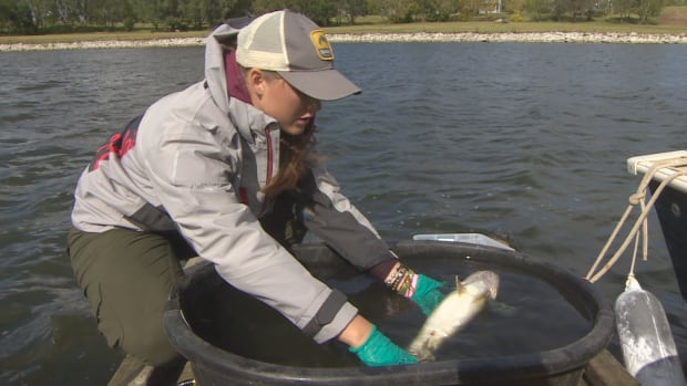 Rebecca Eberts, a researcher at the University of Regina, is studying what happens to fish after they're released at catch-and-release fishing tournaments.
