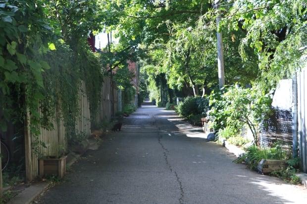 Montreal alleyways