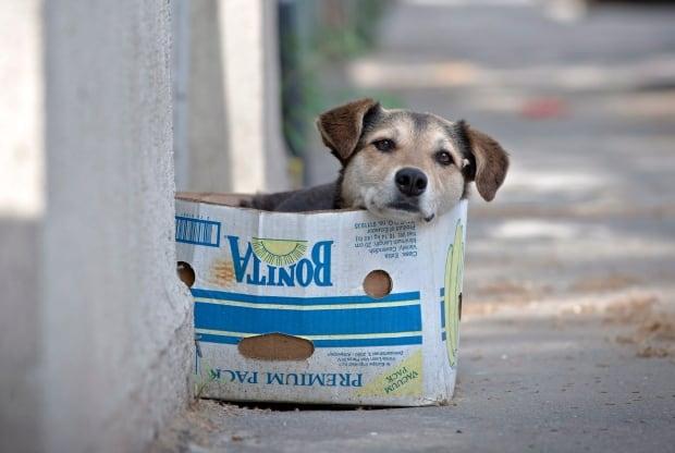 Romania Stray Dogs