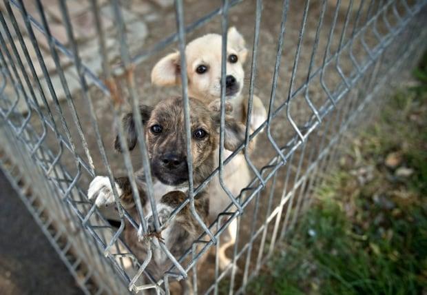 Romania Animal Cruelty