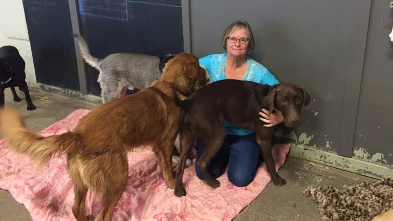 a9aa8af74a4483 'We are heartbroken,' says manager of Saskatoon kennel where 14 dogs died