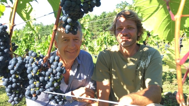 The hot, dry summer has produced a bumper crop at Petite Rivière Vineyards on the South Shore.